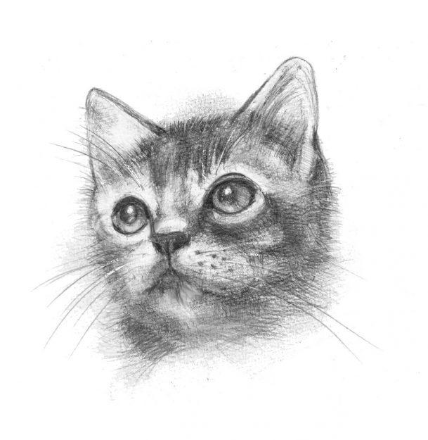 4/22~28卒業生太田敏さんが、健光園あらしやま(京都市)で「ペット 家族の肖像画」展を開催されます。0