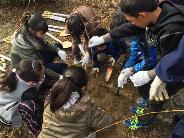 福島の桜が大覚寺に植樹されました!:3